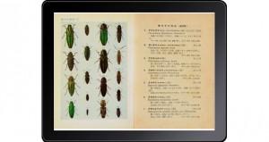 原色千種昆虫図譜-4