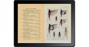 原色千種昆虫図譜-5