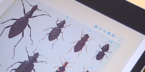 原色千種昆虫図譜-図版