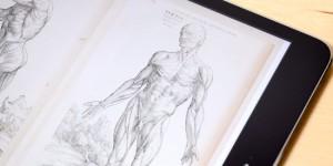 ヴェサリウスの解剖図(部分)