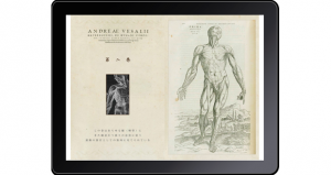ヴェサリウス解剖図